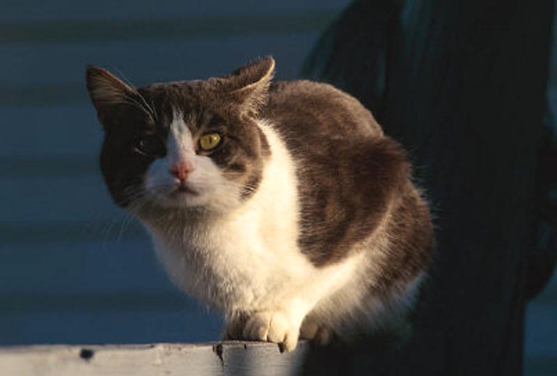 Watchful Cat