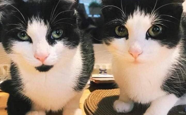 Tinkerbell & Izzy